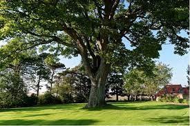 Friska träd i Skåne med besiktning