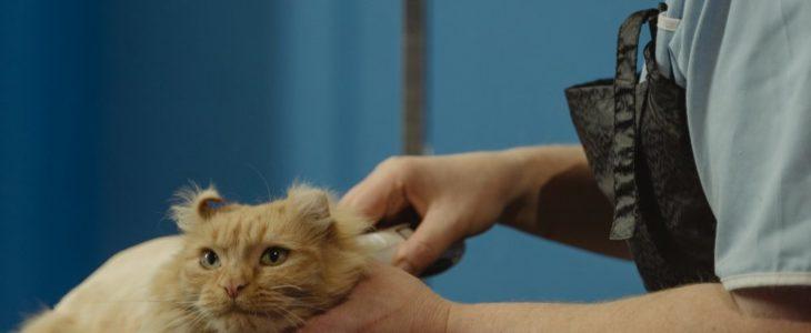 Akutbesök hos veterinär i Bromma