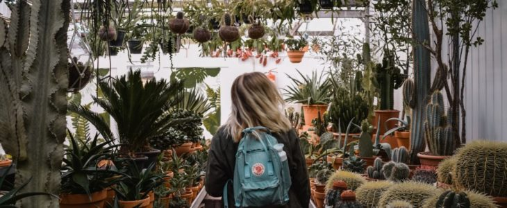 Hitta bästa växterna på en plantskola